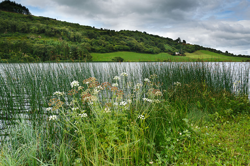 Curraghalicky Lake near Drinagh Co.Cork Ireland