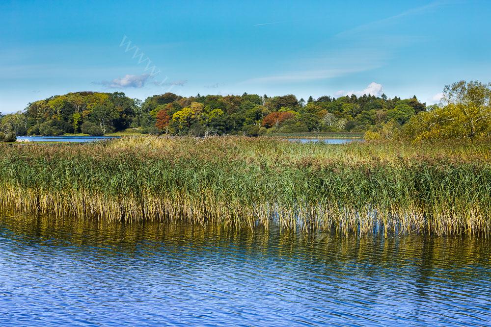 Autumnal Colours, Killarney National Park