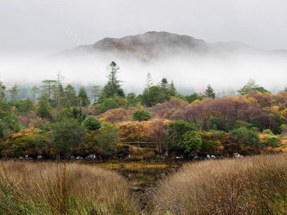 Winter Mist Parknasilla Co.Kerry