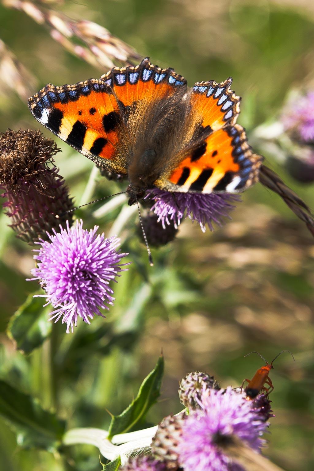 butterfly2977.jpg