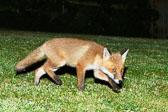 fox201406250800.jpg