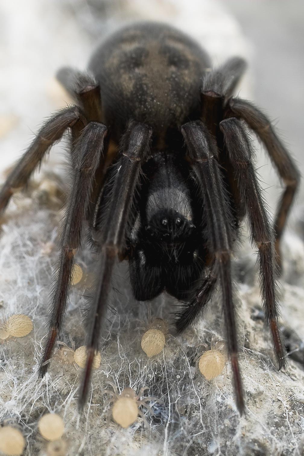 spider9441.jpg