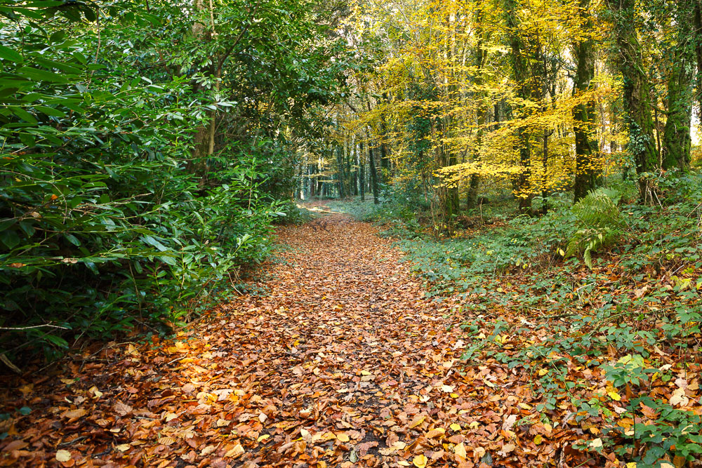 Autumn Colours in the Woods
