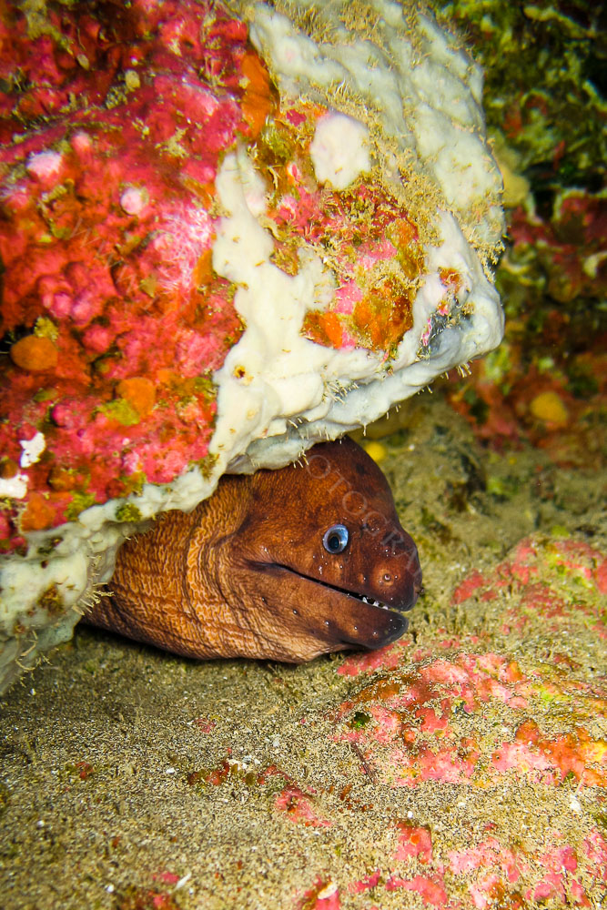 This Moray Eel was at 25 Meters, Is that a smile on his face ?