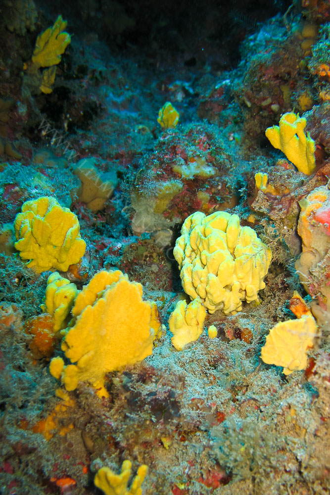 Sea Sponge, Lanzarote.