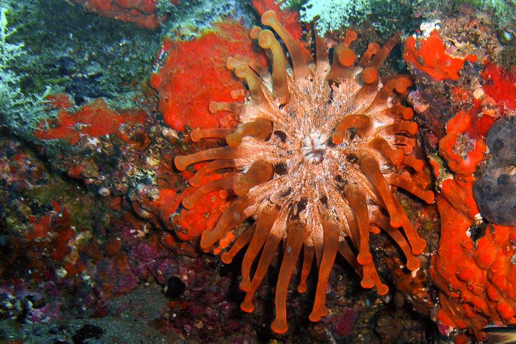 anemone3.jpg