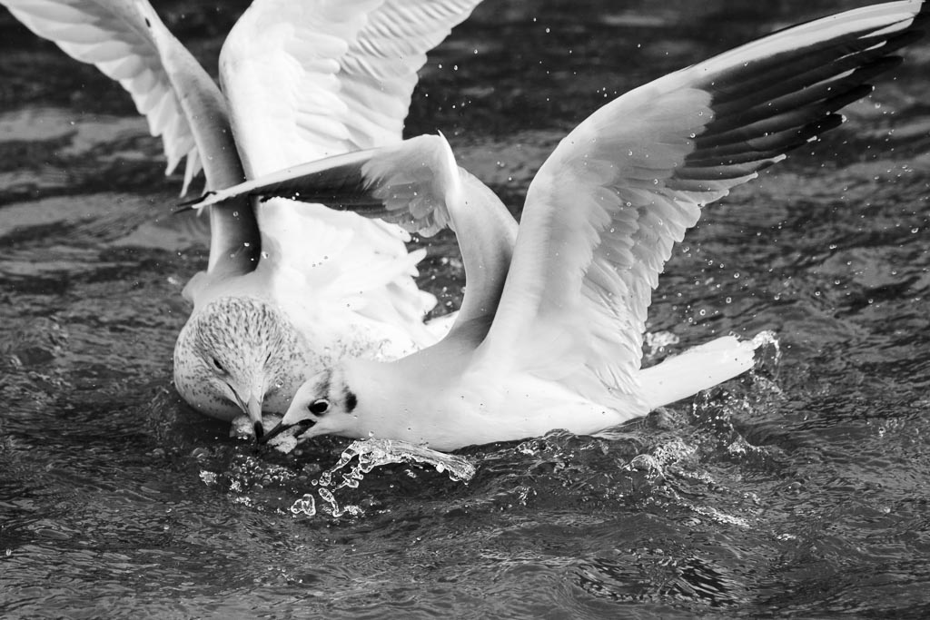 seagull13010110.jpg